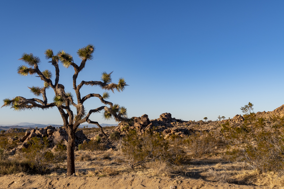 Joshua Tree National Park