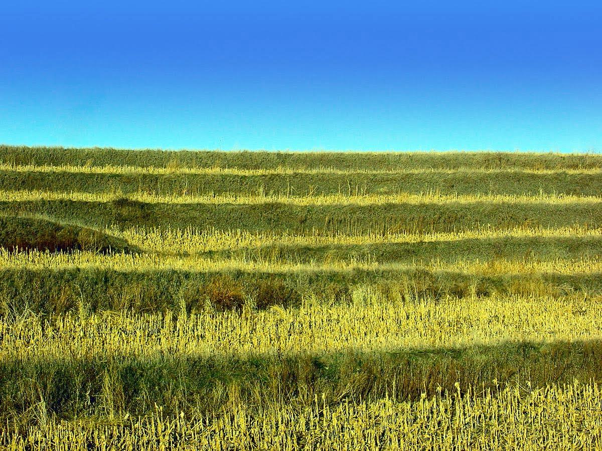 Nebraska field