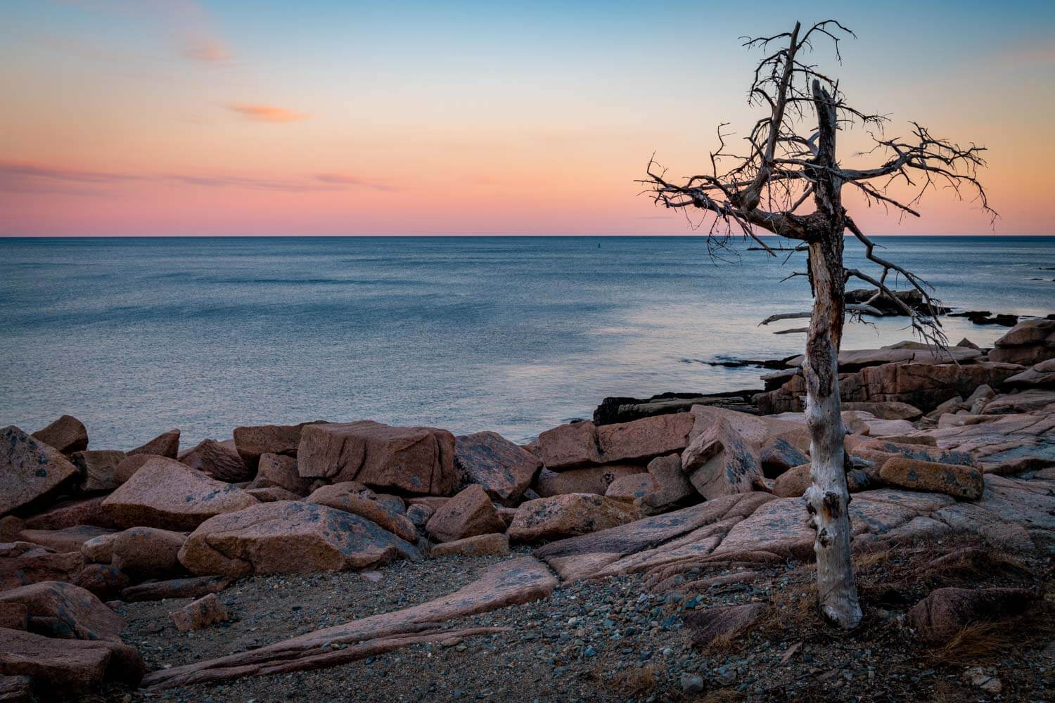 Lone tree at Acadia National Park in Maine
