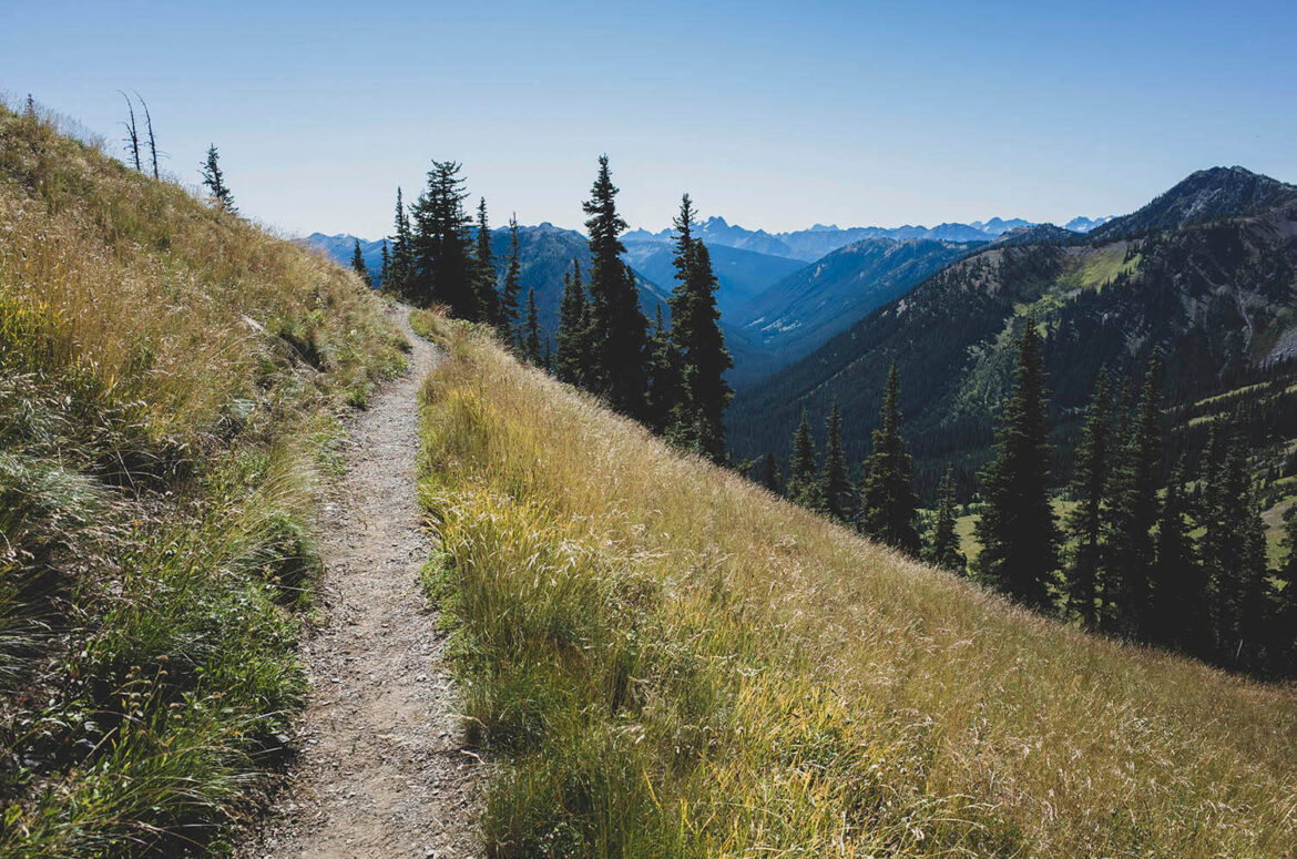 Path along the alpine meadows of the Pacific Crest Trail
